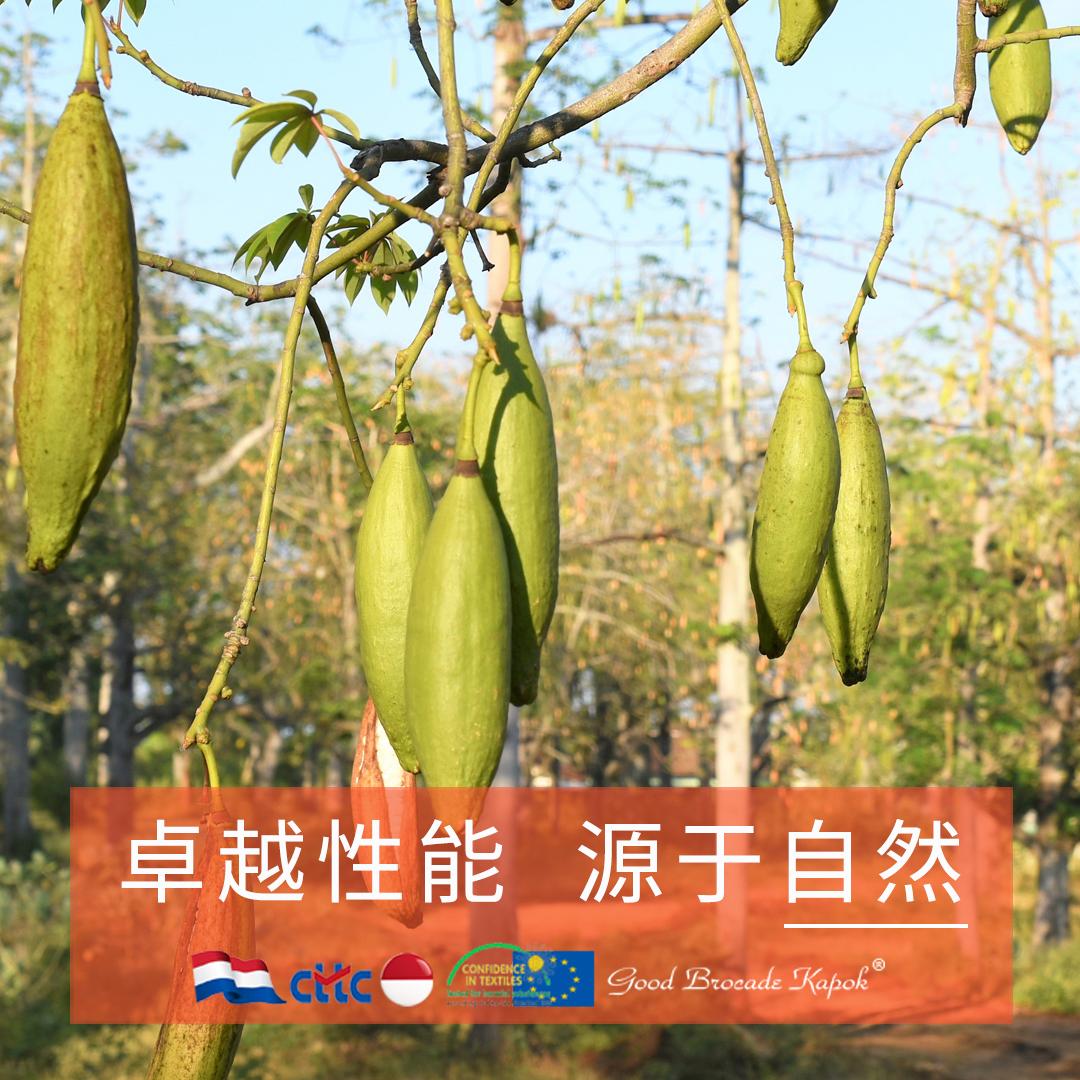 天然木棉纤维的生态保暖与抗菌功能应用特征