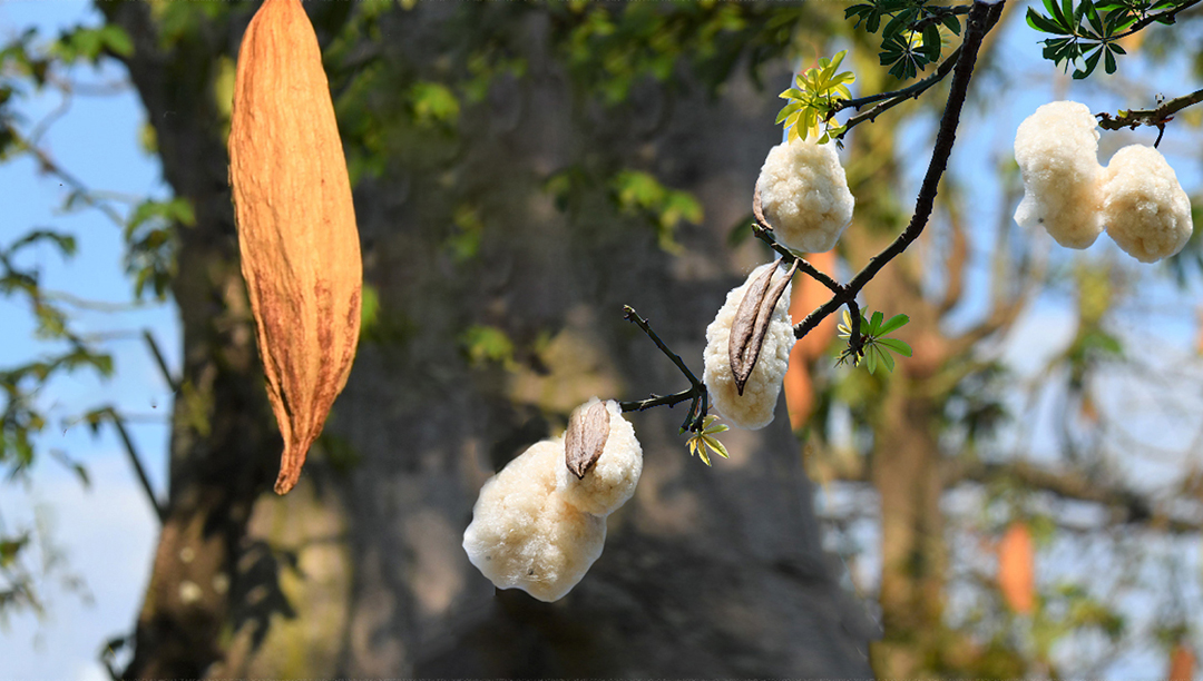 木棉让羊毛和羽绒不再是保暖衣物的唯一选择