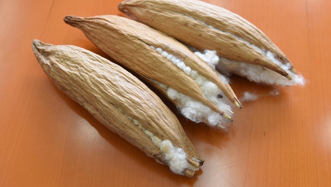 木棉纤维的结构、性能及其产品的保暖性测试(五)