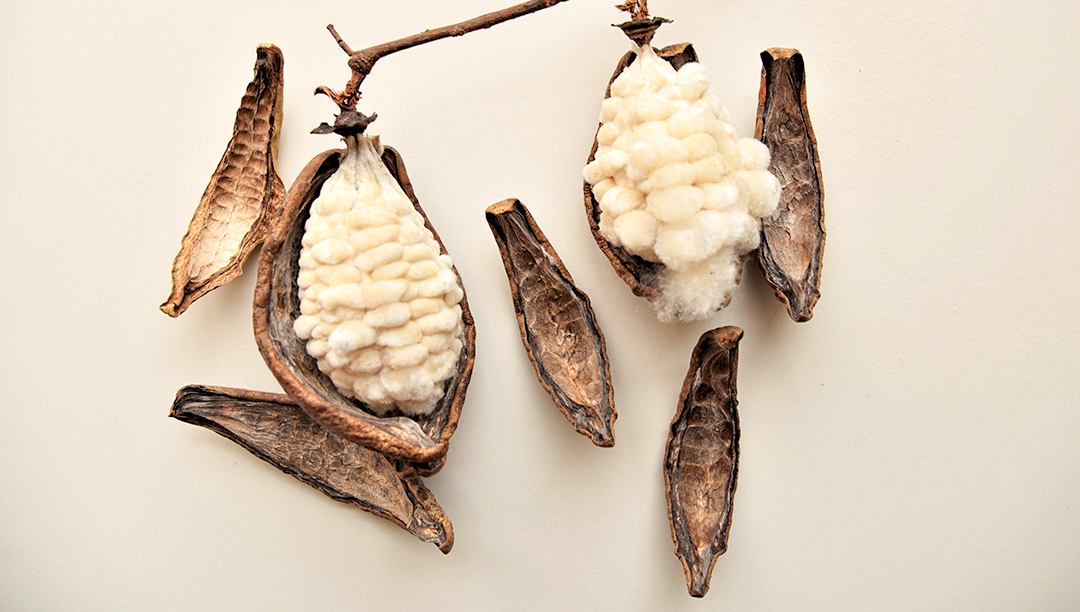 纺织百科--木棉Kapok