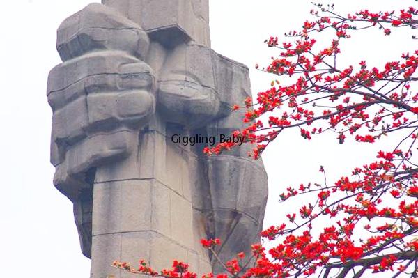 木棉文化--英雄树(下)