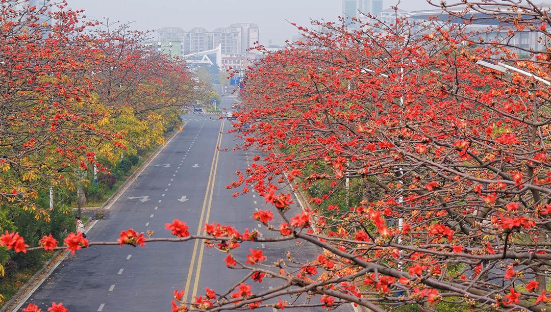 岭南的木棉文化(一)--广州的木棉